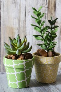 Super cute Dollar Tree flower pots covered in Fabric with cute little succulents! This is ADORABLE!